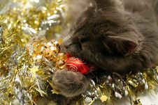 Free Christmas Cat Stock Photos - 3626533