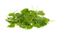Free Fresh Spinach Leaves Royalty Free Stock Photo - 3626775