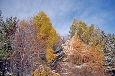 Free First Snow Stock Images - 3627614