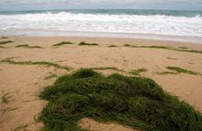 Sea Grass On Beach In The Caribbean Royalty Free Stock Photography