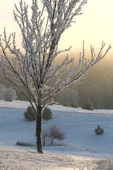 Free Winter Dawn Stock Photos - 3629823