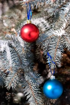 Free Christmas Ornament Royalty Free Stock Photo - 3629995