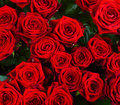 Free Red  Roses Stock Photos - 36202013