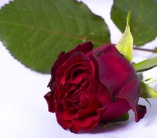 Free Red Rose Stock Photo - 36202090