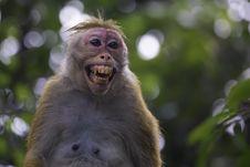Free Monkey Stock Photos - 36205633