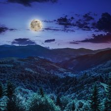 Free Coniferous Forest On A Mountain Slope At Night Stock Images - 36206064