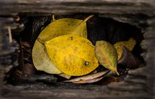 Free Leafs In A Hole Stock Photography - 36214332
