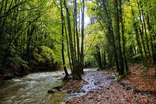 Free Autumn Trees Along The River Alyn, Rhydymwyn Stock Photos - 36214823