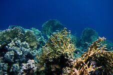 Free Beautiful Coral Stock Photos - 36219143