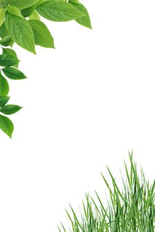 Free Leaves And Grass Stock Photo - 36222000
