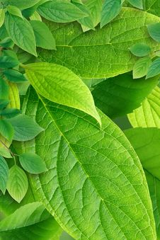 Free Green Leaves Background Stock Photo - 36222090
