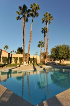 Free Palm Trees By A Calm Pool Royalty Free Stock Photo - 36225775