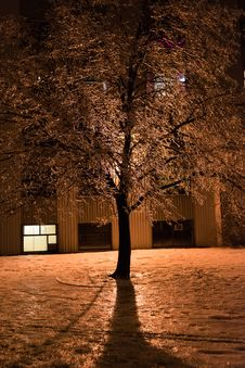 Free Views And Details After An Ice Storm Royalty Free Stock Images - 36247629