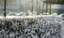 Free Frosty Morning Stock Photo - 36248400