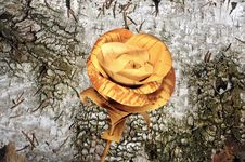 Rose Flower Handmade Of Birch Bark On The Old Birch Bark Stock Photo