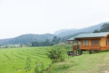 Home Adjacent Rice Fields Stock Images