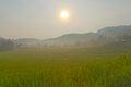 Free Rice Field On Mountain. Stock Photos - 36251263