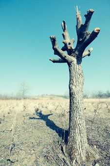 Free Old Tree Stock Images - 36252834