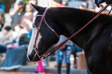Portrait Of A Beautiful Horse Royalty Free Stock Images