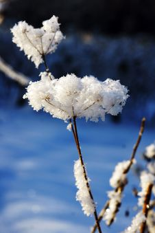 Free Hoarfrost On A Blade. Royalty Free Stock Image - 36272806