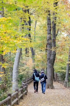 Couple In Colorful Autumn Forest Royalty Free Stock Image