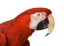 Free Bird Royalty Free Stock Image - 36279256