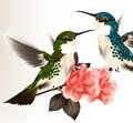 Free Cute Valentine Card With Couple Of Humming Bird And Roses Royalty Free Stock Photo - 36282485