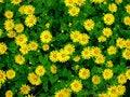 Free Flowers Omiegi. Stock Photos - 36283443