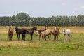 Free Horses Stock Photo - 36283830