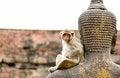 Free Monkey Stock Images - 36285404
