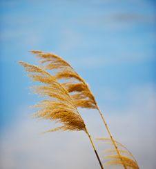 Free Autumn Motive Stock Images - 36280024