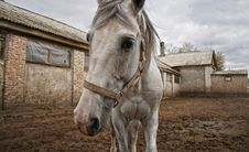 Free Horse In The Paddock Royalty Free Stock Images - 36281009