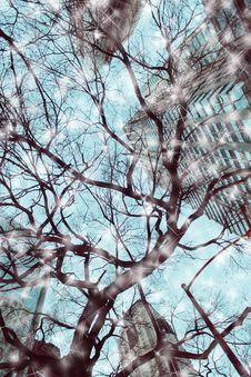 Free Winter In The City Stock Images - 36283394