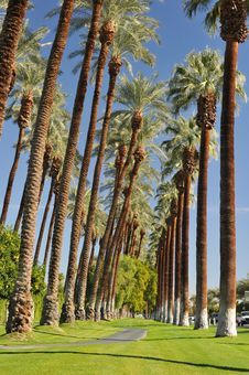 Free Palm Trees Line A Walking Path With Sky Stock Photos - 36285513