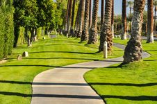 Free Palm Trees Line A Walking Path With Sky Stock Images - 36285514