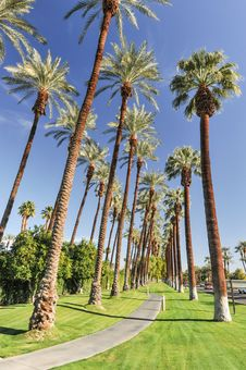 Free Palm Trees Line A Walking Path With Sky Royalty Free Stock Photos - 36285548