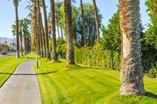 Free Palm Trees Line A Walking Path With Sky Royalty Free Stock Photography - 36285777