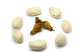 Free Jackfruit Seeds And The Dry Seeds Royalty Free Stock Photos - 36295598