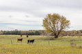 Free Cows Standing In The Pasture Stock Photos - 36297743