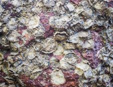 Texture Of Oyster On The Rock Stock Photos