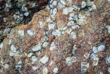 Free Texture Of Sea Animal On The Rock Stock Photo - 36292510