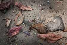 Free Dry Leaf And Stone On The Sand Royalty Free Stock Images - 36298559