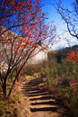 Free Great Wall In The Autumn Stock Photo - 3630590