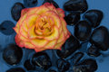 Free Rose In Black Pebbles. Stock Photography - 3634742