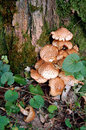 Free Macro Of Mushrooms And Moss Stock Photography - 3634912