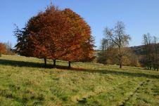 Free Autumn Trees Royalty Free Stock Photos - 3630198
