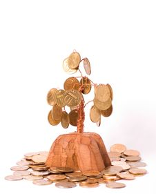 Free Money Tree Stock Photography - 3630292
