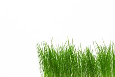 Free Green Fresh Grass Stock Photography - 3630592