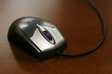 Free Closeup Of Mouse Royalty Free Stock Images - 3632539