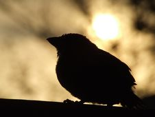 Free Sunset Over A Baby Bird Royalty Free Stock Image - 3633436